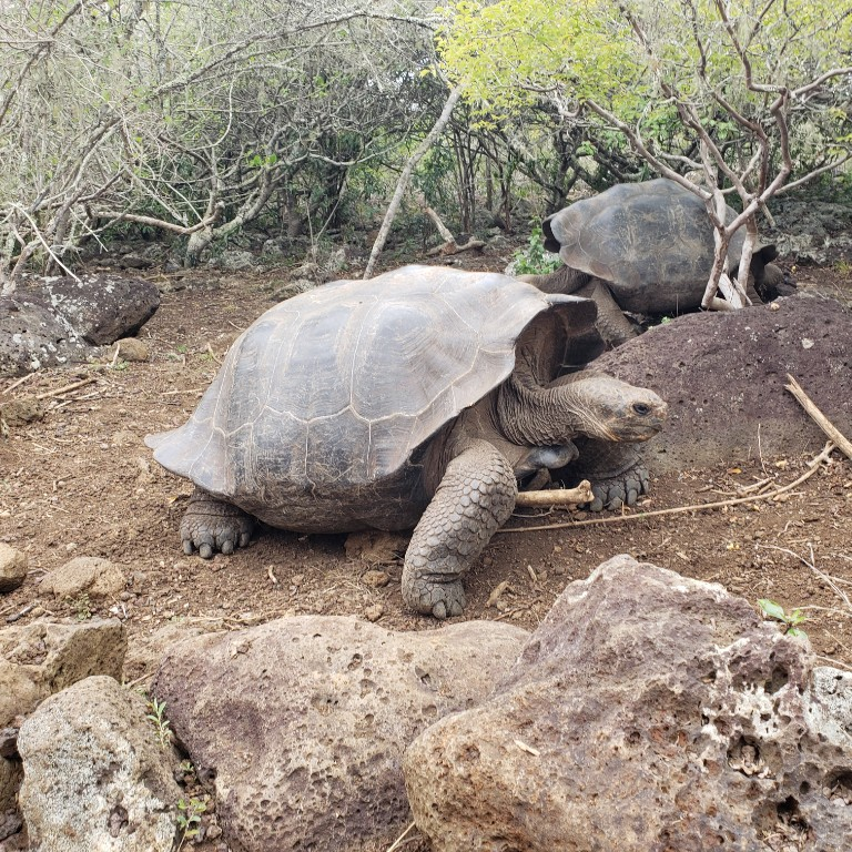 HIEP recipients in South America - Samuel Gutierrez's photo of a large tortoise in Ecuador